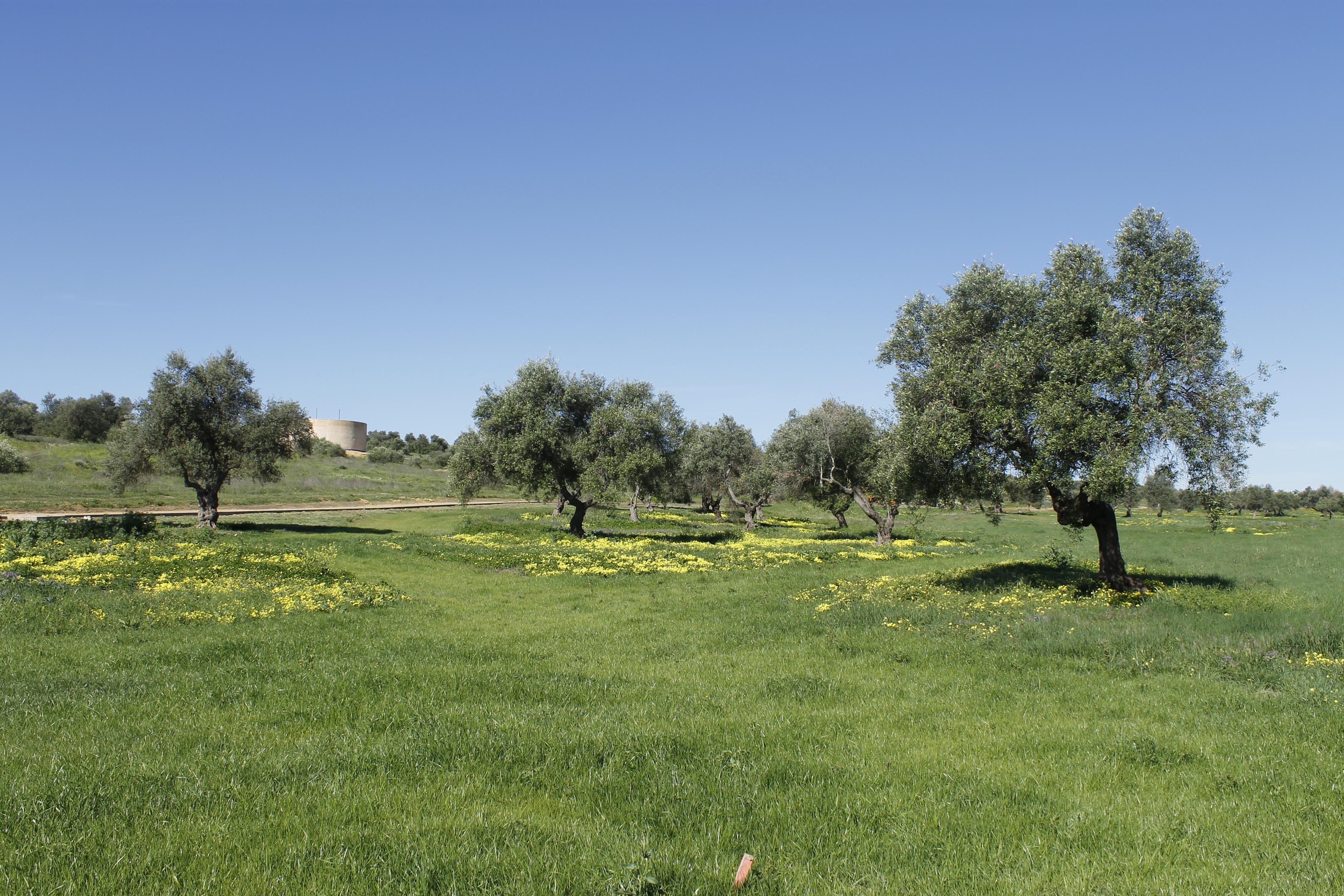 El lunes, 1 de agosto, se reanudan las obras del Parque del Olivar ...